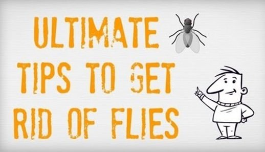 How to Get Rid of Flies? (Fast & Naturally)
