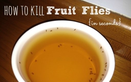 How to Kill Fruit Flies? (Traps & All Methods)
