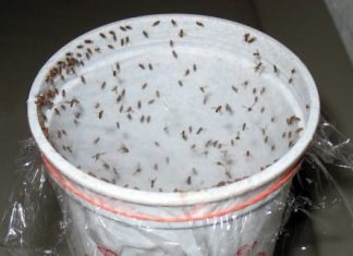 Homemade Traps to Get Rid of Fruit Flies Without Chemicals
