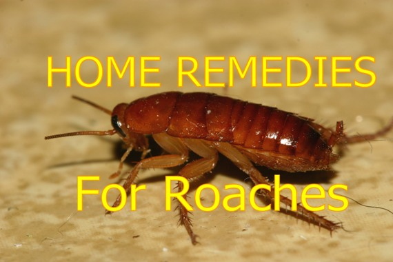 Home remedies for roaches cockroaches
