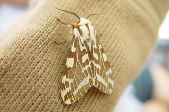 how to get rid of moths. Black Bedroom Furniture Sets. Home Design Ideas