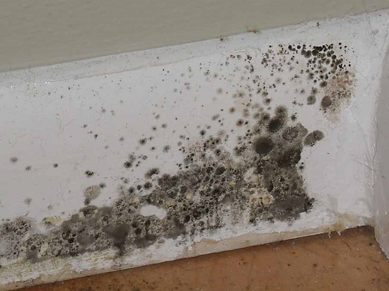 Best Methods To Get Rid Of Black Mold
