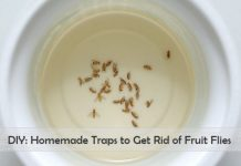 homemade fruit fly trap to get rid of fruit flies