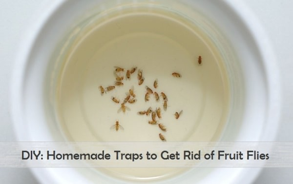 homemade fruit fly trap to get rid of fruit flies. Black Bedroom Furniture Sets. Home Design Ideas