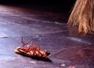 what kills cockroaches instantly