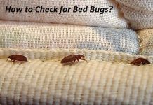 How to Check for Bed Bugs tell if you have bed bugs