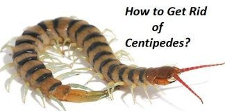 How to Get Rid of Centipedes
