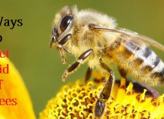 get rid of bees